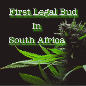 1st Legal Bud In South Africa